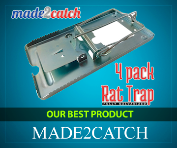 Best Trap for Rats