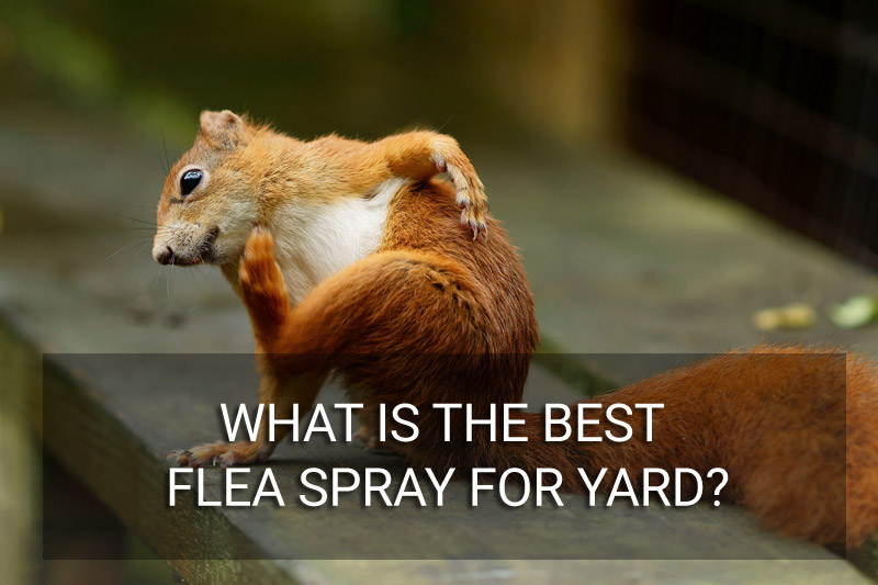 Best Flea Spray For Yard