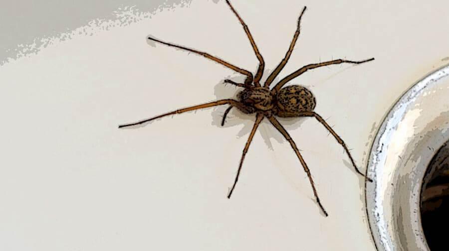 Best Spider Killer - Buyer's Guide 1