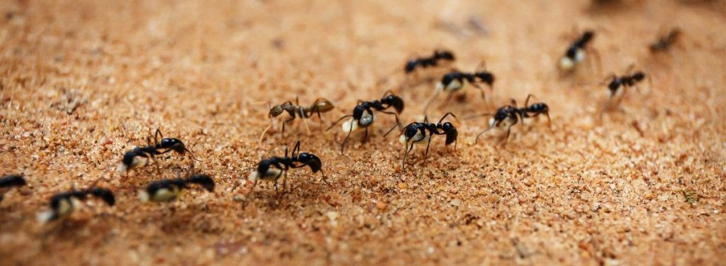 Best Ant Trap - Buyer's Guide 1